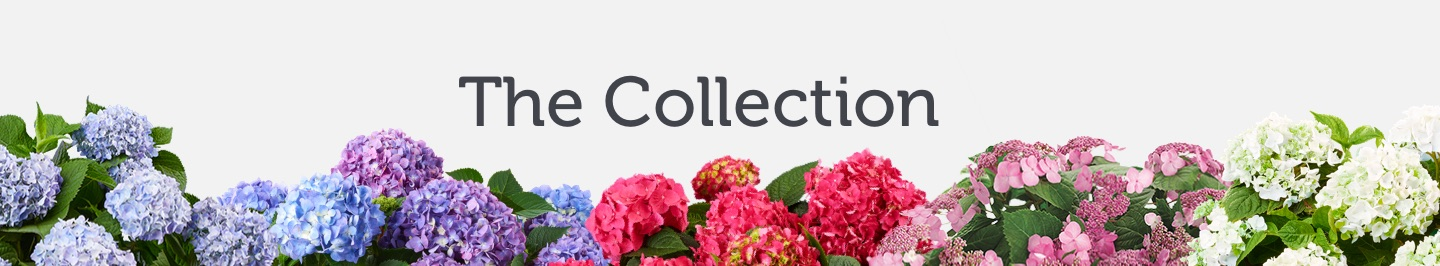 the-collection-endless-summer