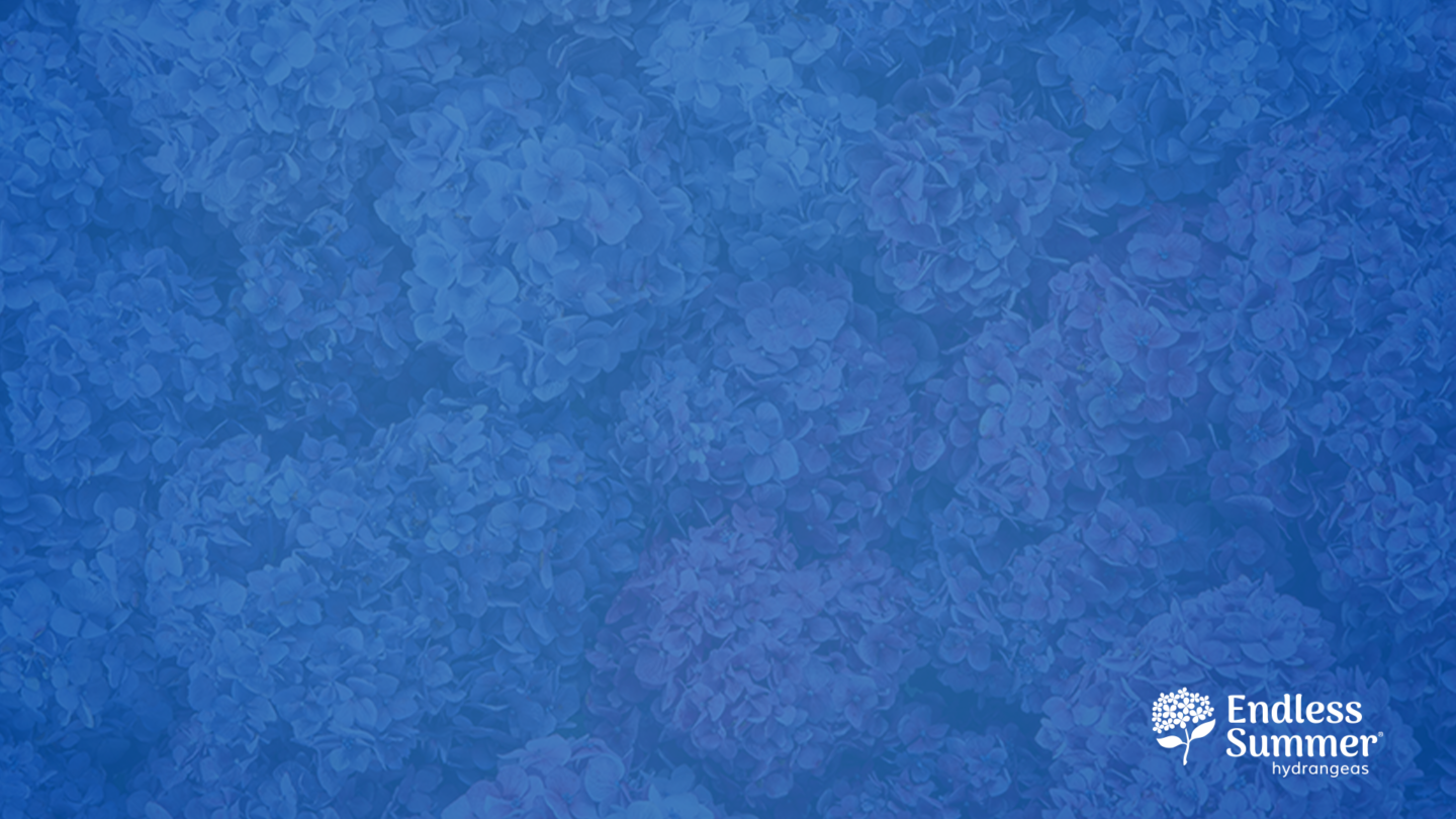 ES_Zoom_Background 8